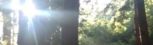 John Muir Trees